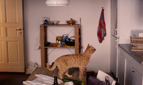 O pisica deloc ciudata a trecut pe la BIFF
